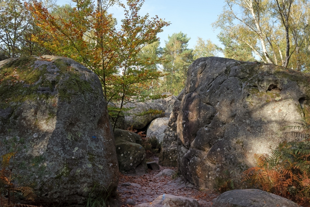 Sentier Denecourt - Colinet 12 Rocher Canon automne (13)